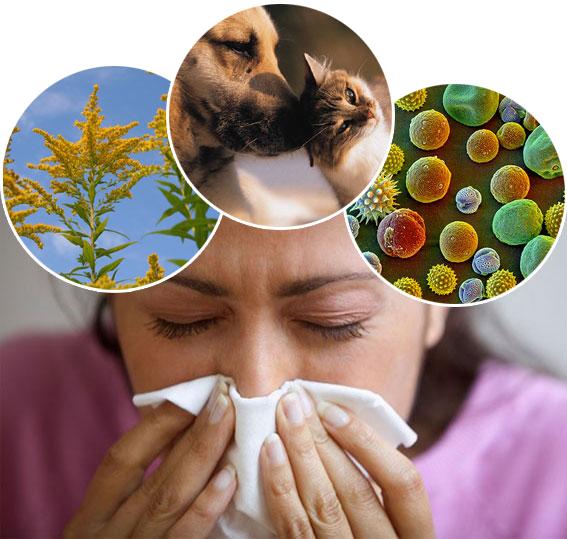 EUROIMMUN AG, autoimmune, molecular biology, Allergy